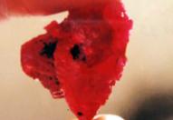 Truy tìm những viên ruby đắt giá nhất Việt Nam